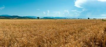 De gebieden van de landbouwbedrijftarwe stock fotografie