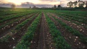 De gebieden van de landbouwvoor, het gebied van de zonlichtvenkel stock footage