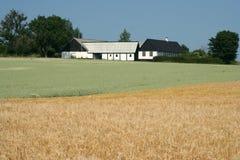 De gebieden van tarwe in het landbouwbedrijf Stock Foto