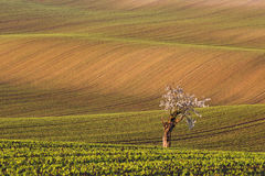 De gebieden van zuidenmoravian, de gebieden van de Tsjechische Republiek, moravian heuvels Stock Fotografie