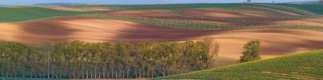 De gebieden van zuidenmoravian, de gebieden van de Tsjechische Republiek, moravian heuvels Stock Foto's