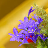 De gebiedsbloemen van Irisjaponica Thunb Royalty-vrije Stock Afbeelding