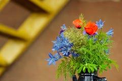 De gebiedsbloemen van Irisjaponica Thunb Stock Foto's