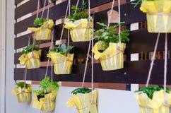 De gebladerteinstallatie in potten hangt op latten Stock Fotografie