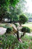 De gebogen boom Stock Afbeelding