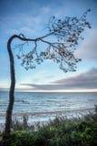 De gebogen boom dichtbij ziet Royalty-vrije Stock Foto's
