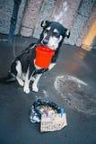 De gebonden hond vraagt om aalmoes in de straat De eigenaar gebruikt het dier om geld op de straten te maken Dieren die geld make royalty-vrije stock afbeeldingen