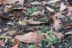 De gebrande boom in het bos na wildfire royalty-vrije stock foto