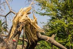 De gebroken boom Stock Fotografie