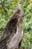De gebroken tak brak over met groene bladeren op achtergrond stock foto