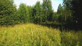 De gebruikelijke rand van het Russische bos stock foto's