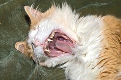 De Geeuw van de kat Royalty-vrije Stock Afbeelding