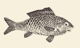 De Gegraveerde Vectorillustratie van de vissenbrasem Wijnoogst Stock Afbeelding