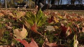 De gehandicapte mens verzamelt de herfstbladeren in park stock video