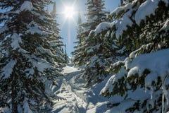 De geheimzinnige bergen van het de winterlandschap in de winterbomen behandelde sneeuw Stock Fotografie