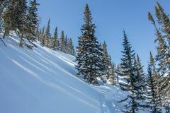 De geheimzinnige bergen van het de winterlandschap in de winterbomen behandelde sneeuw Royalty-vrije Stock Afbeeldingen