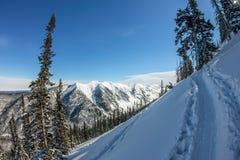 De geheimzinnige bergen van het de winterlandschap in de winterbomen behandelde sneeuw Royalty-vrije Stock Afbeelding