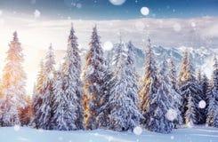 De geheimzinnige majestueuze bergen van het de winterlandschap binnen Magica Stock Fotografie