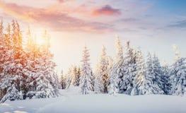 De geheimzinnige majestueuze bergen van het de winterlandschap in de winter Magische de wintersneeuw behandelde boom Dramatische  stock afbeelding