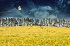 De geheimzinnige van het Landschap â- Gebied, Maan en Hemel van de Nacht Royalty-vrije Stock Afbeelding