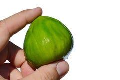 De gehele rijpe die ficus carica van het fig.fruit in volwassen mensenlinkerhand wordt gehouden op witte achtergrond stock fotografie