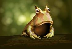 De gehoornde kikker van Amazonië Royalty-vrije Stock Foto