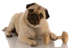 De gehoorzaamheid van de hond opleiding Royalty-vrije Stock Foto's