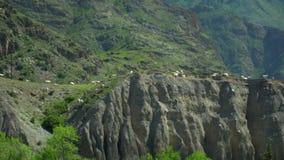 De geiten gaan op een groen gras Een weiland voor het vee Het landschap van de berg stock video