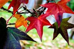 De gekleurde Bladeren van de Herfst stock afbeelding
