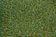 De gekleurde oude textuur van de grungesteen Stock Fotografie