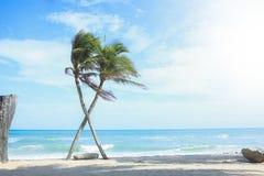 De gekruiste palm bij het overzees stock foto