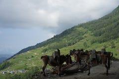 De geladen muilezels in Annapurna-Kring Royalty-vrije Stock Foto's