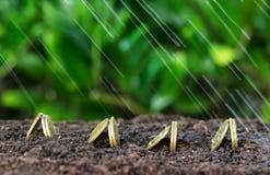De geldgroei en regen op bovenkant Stock Fotografie