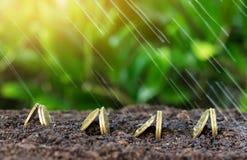 De geldgroei en regen op bovenkant conceptenmuntstukken in grond Royalty-vrije Stock Afbeelding