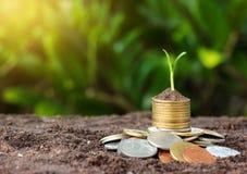 De geldgroei en zaailing op bovenkant conceptenmuntstukken in grond Geel t Stock Afbeelding