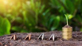 De geldgroei en zaailing op bovenkant conceptenmuntstukken in grond Geel t Stock Afbeeldingen