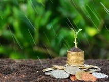 De geldgroei, zaailing en regen op bovenkant conceptenmuntstukken Stock Foto's