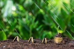 De geldgroei, zaailing en regen op bovenkant conceptenmuntstukken Royalty-vrije Stock Foto
