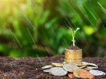 De geldgroei, zaailing en regen op bovenkant conceptenmuntstukken in grond Ye Stock Afbeelding