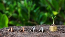 De geldgroei, zaailing op bovenkant conceptenmuntstukken Royalty-vrije Stock Foto