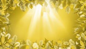 De gele achtergrond van de bladerenherfst met lichte serie Royalty-vrije Stock Fotografie