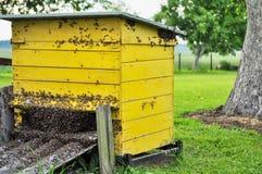 De gele bijenkorf wordt belegerd door bijen Royalty-vrije Stock Afbeeldingen