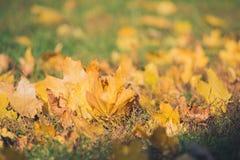 De gele bladeren van de de herfstesdoorn op groen gras Bokeh vertroebelde artistieke achtergrond Royalty-vrije Stock Fotografie
