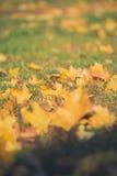 De gele bladeren van de de herfstesdoorn op groen gras Bokeh vertroebelde artistieke achtergrond Stock Foto