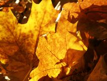 De gele bladeren van de herfst stock fotografie