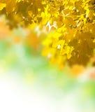 De gele bladeren van de herfst Stock Foto