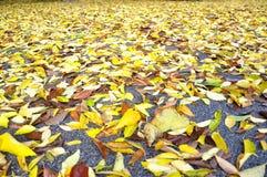 De gele bladeren van de herfst op de straten van Florence Stock Afbeeldingen