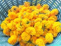 De gele bloem in de mand Stock Foto