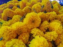 De gele bloem in de mand Stock Afbeeldingen
