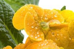 De gele bloem van de lente royalty-vrije stock afbeeldingen
